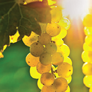 California leads the nation in wine production. Livermore has more than 40 nearby wineries.
