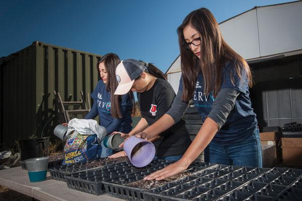 volunteers work with seedlings