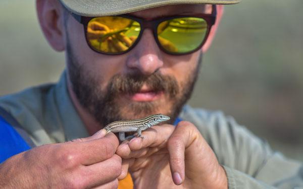 biologist examines lizard