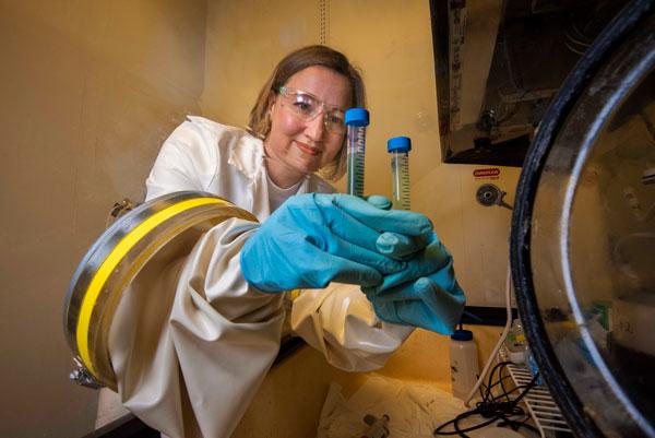 scientist compares test tubes in anaerobic glovebox