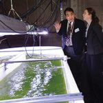 Algae raceway paves path from lab to real-world applications