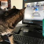 cat watches exercise video on laptop